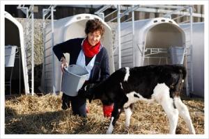 Jamomine geeft de kalfjes melk van hun eigen moeder te drinken (foto: deneelder.nl)