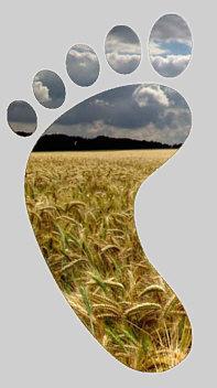 footprint graan