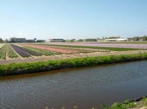De pastelkleuren van de hyacintenvelden.