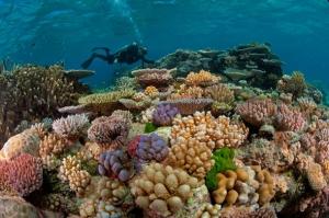 koraal-83
