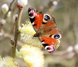 bijen-vlinders