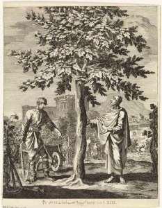 vijgeboom lucas 13 6-9