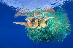 zeeschildpad-in-net