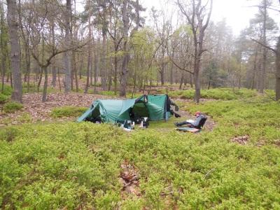 kamperen in bos